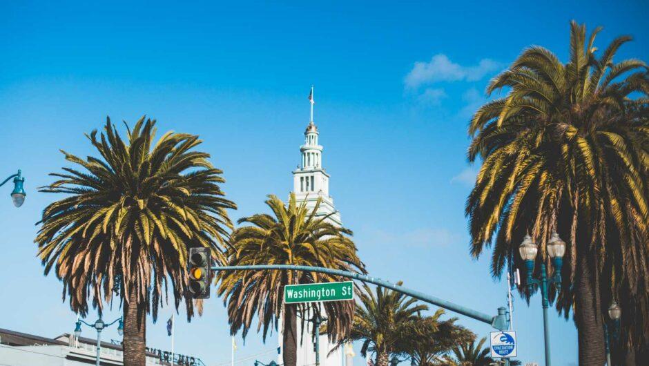 Washington Street Palms in San Francisco